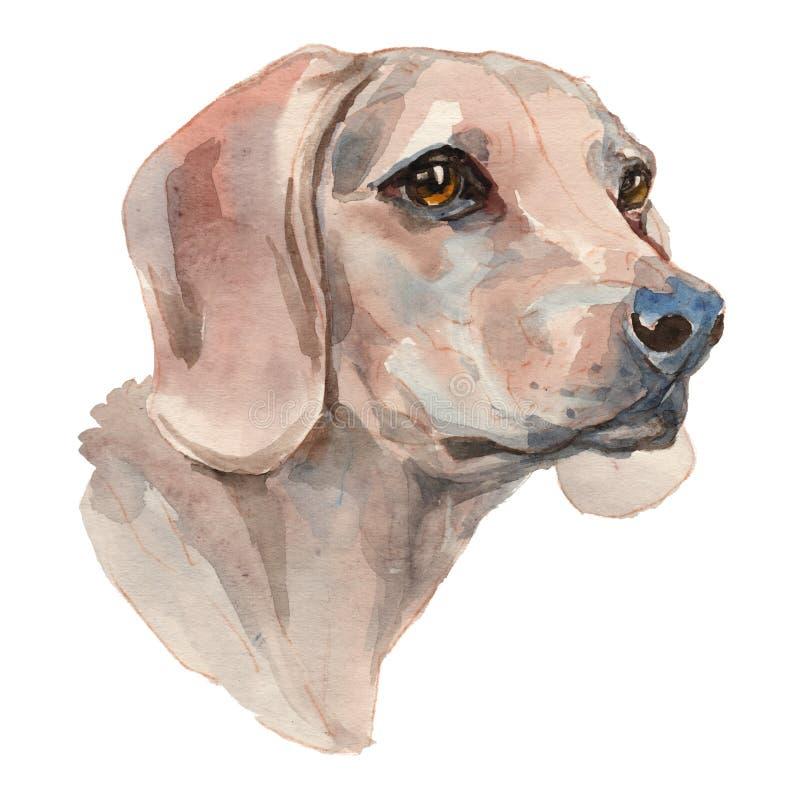 El perro serbio, perro pintado a mano de la acuarela libre illustration