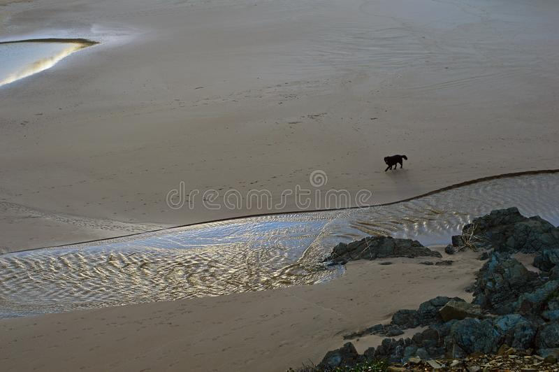 El perro solitario funciona con la playa fotos de archivo libres de regalías
