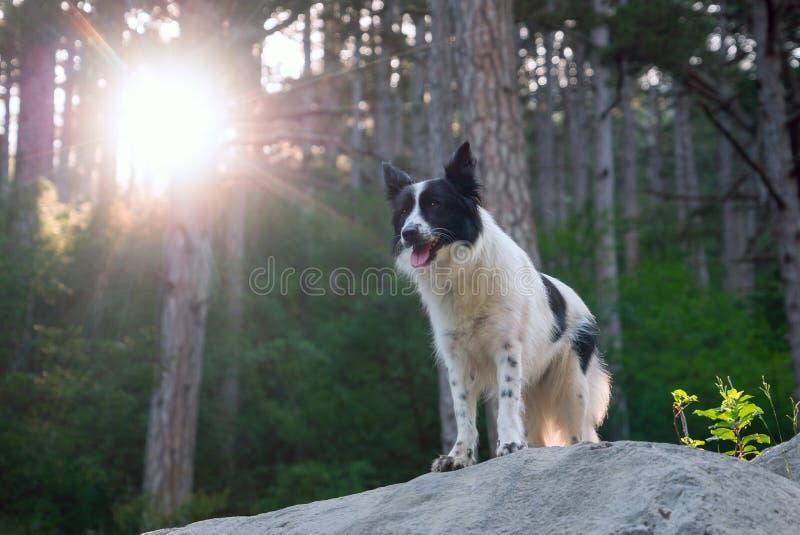 El perro sonriente en el sol está en una cuesta en las montañas fotografía de archivo