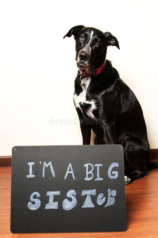 El perro tiene una nueva hermana fotos de archivo libres de regalías