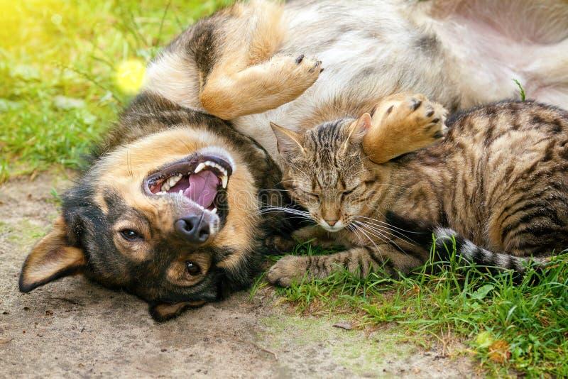 El perro y el gato son mejores amigos imagen de archivo