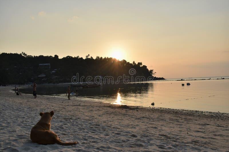El perro y la puesta del sol imagenes de archivo