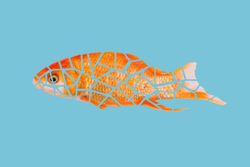 El pescado de oro se corta en peque?as part?culas Detalles de pescados en un fondo del a?o Concepto moderno, dise?o del arte pop imagen de archivo