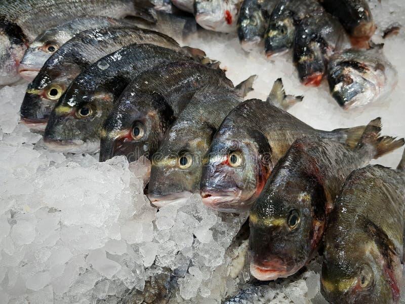 El pescado, dorado, perca de lucio en el mercado de pescados miente en el hielo imagen de archivo libre de regalías