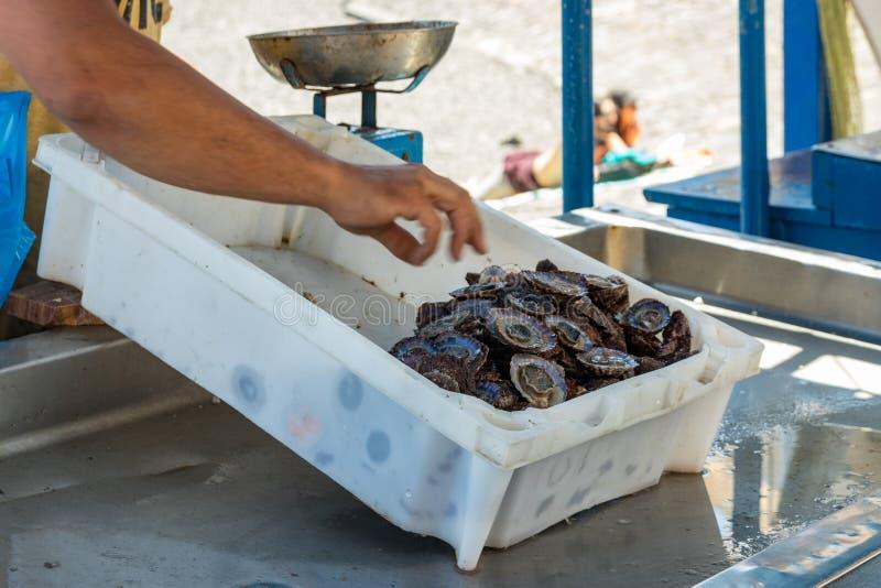 El pescador después de una pesca acertada, detrás del contador vende su captura de pescados y de crustáceos Día soleado caliente  imagen de archivo