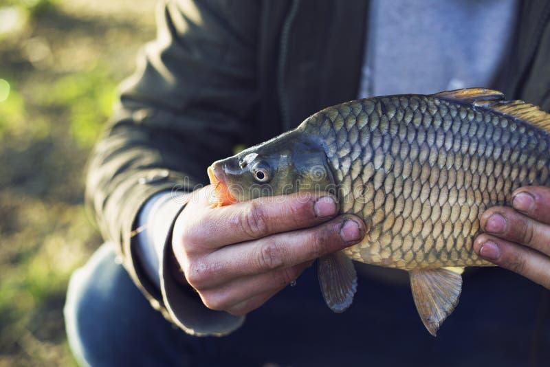 El pescador en el lago cogi? una carpa vacaciones que pescan concepto foto de archivo libre de regalías