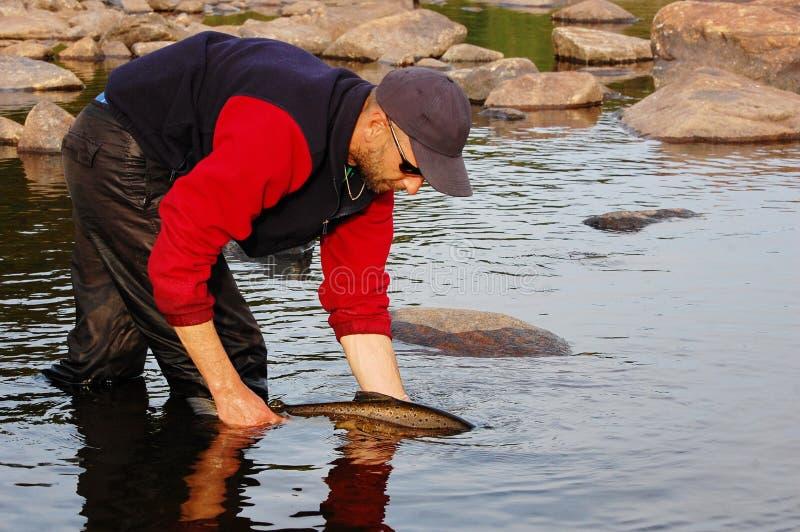 El pescador lanza un salmón de nuevo al río fotos de archivo libres de regalías