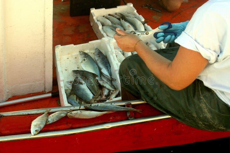 El pescador limpia los pescados al borde del barco de pesca imagenes de archivo