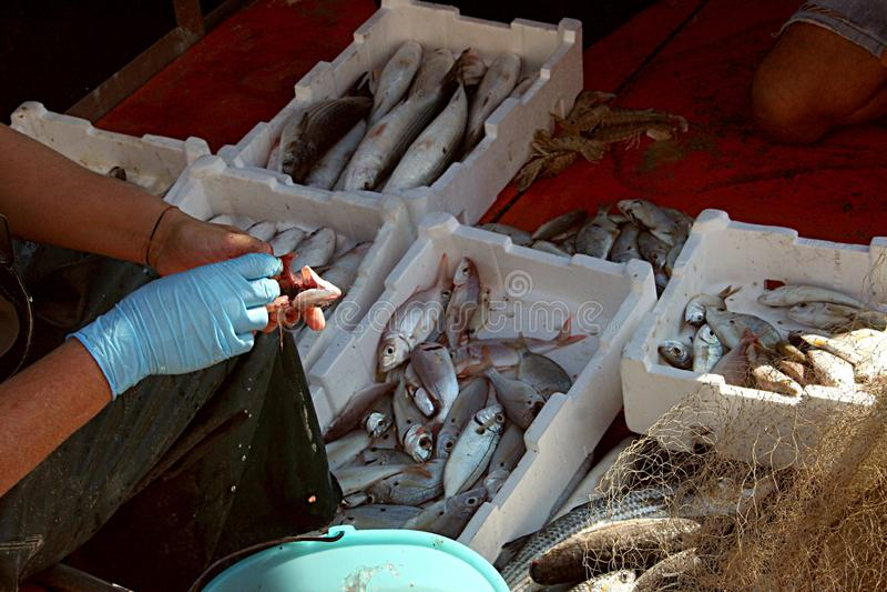 El pescador limpia los pescados a bordo del barco de pesca imágenes de archivo libres de regalías
