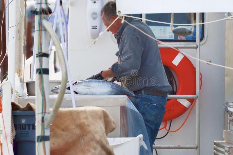 El pescador limpia pescados en el barco imagen de archivo