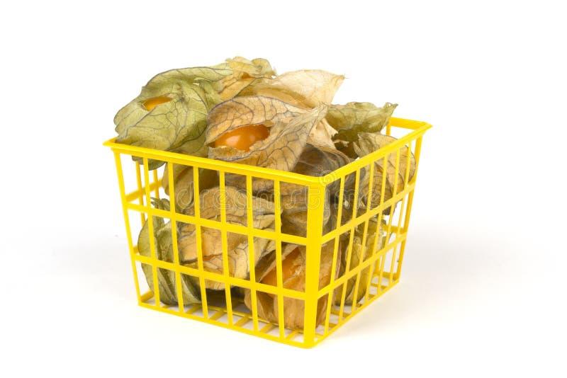 El Physalis da fruto en cesta plástica y aislado en el fondo blanco imagen de archivo libre de regalías