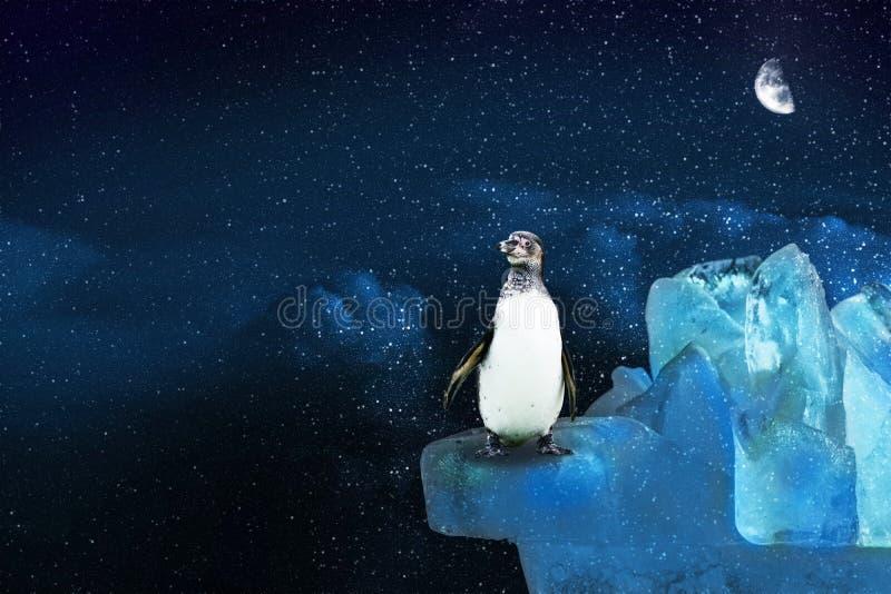 El pingüino ártico solitario se coloca en una montaña helada y las miradas en el cielo estrellado en el claro de luna, ejemplo stock de ilustración