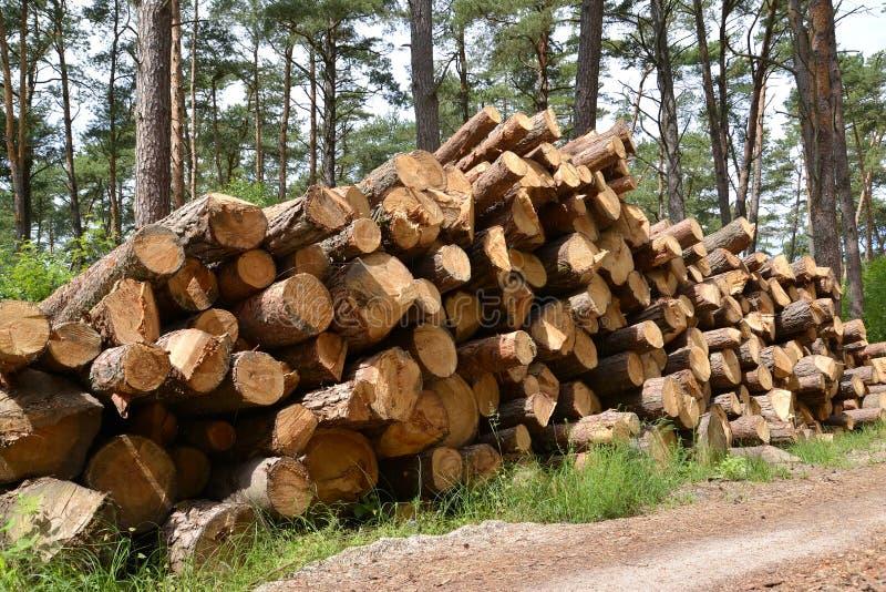 El pino almacenado abre una sesi n la madera adquisici n de madera imagen de archivo imagen de Maderas el pino