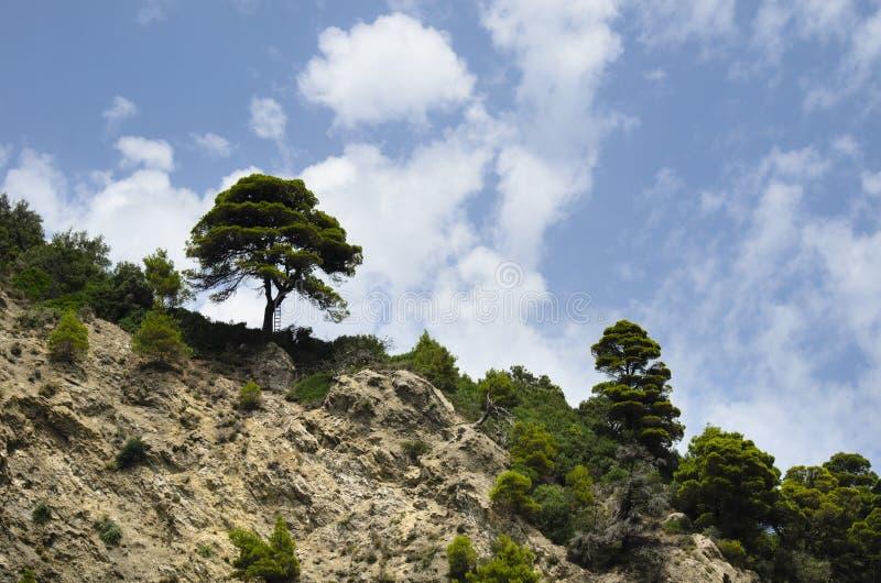 El pino marítimo encima de un acantilado cerca del tronco allí es una escalera que descansa sobre ella, el cielo azul está nublad imagenes de archivo