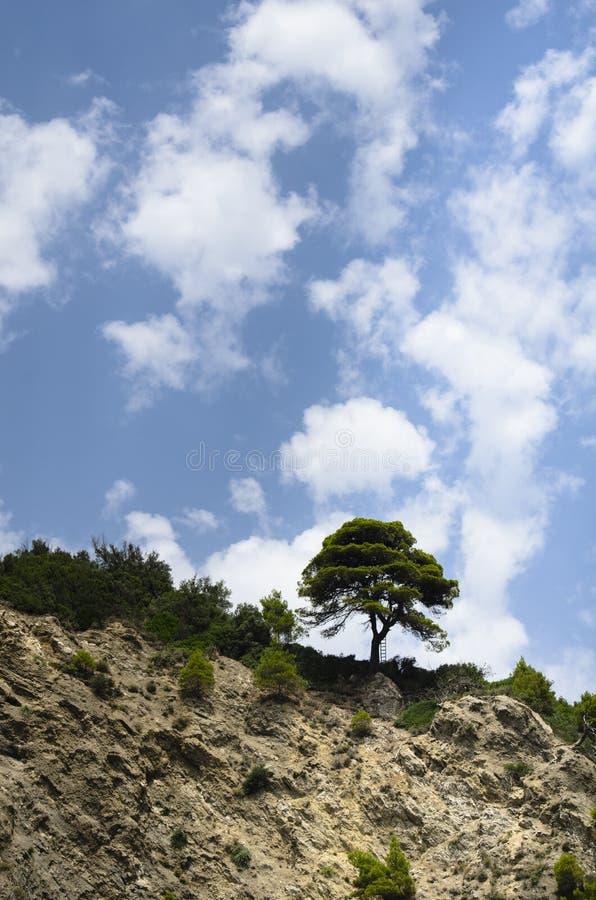 El pino marítimo encima de un acantilado cerca del tronco allí es una escalera que descansa sobre ella, el cielo azul está nublad imagen de archivo libre de regalías