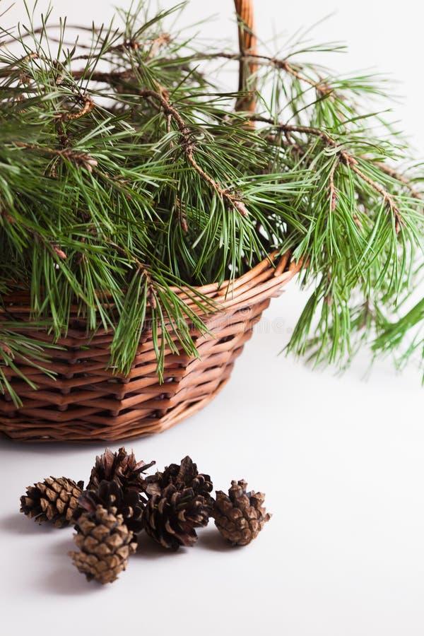 El pino ramifica en los conos de la cesta y del pino imagenes de archivo