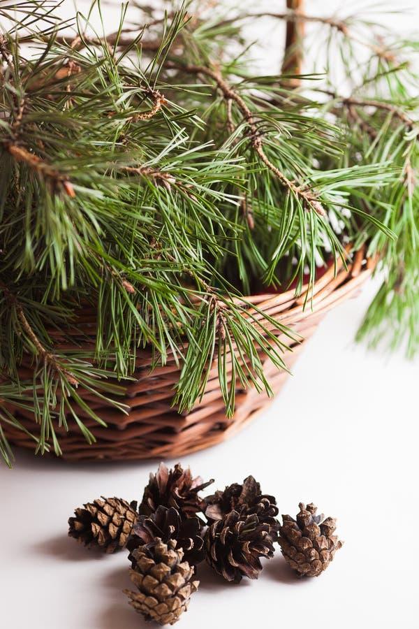 El pino ramifica en los conos de la cesta y del pino fotografía de archivo libre de regalías