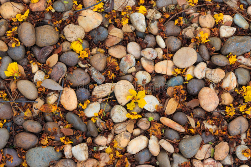 El piso de piedra sucio del primer con las hojas secadas texturiza el fondo fotos de archivo