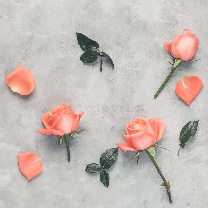 El plano de la visión superior pone rosas rosadas en fondo gris Decoración romántica libre illustration