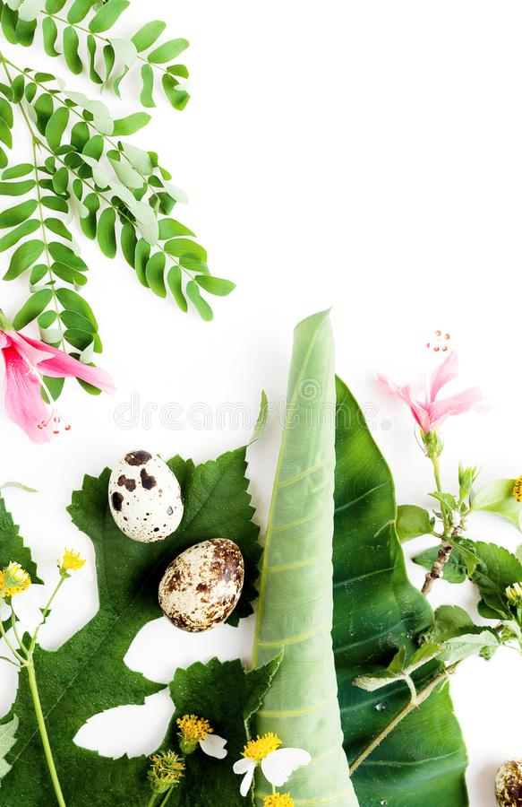 El plano de la visión superior puesto aisló en parte las flores y las hojas de la manzanilla con los huevos de codornices en la m imágenes de archivo libres de regalías