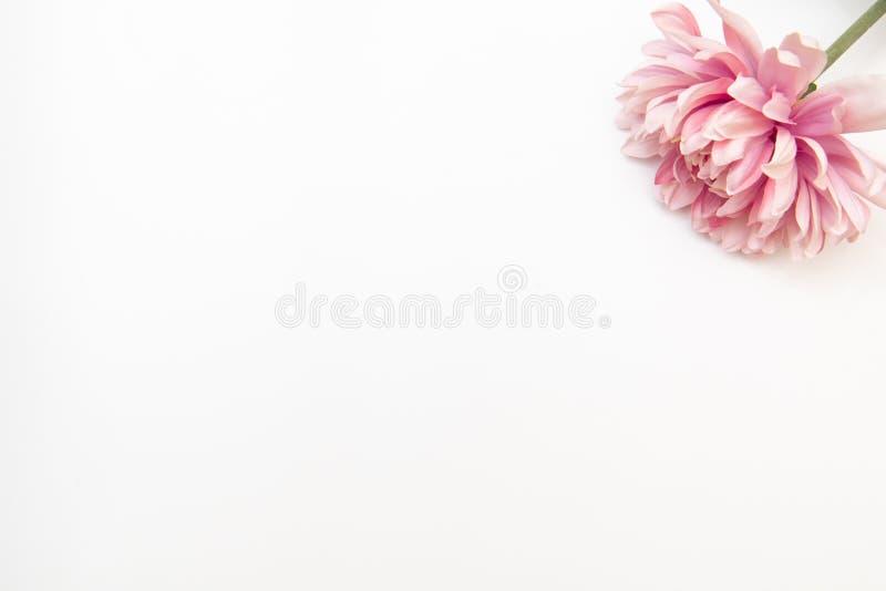 El plano diseñado mínimo pone con la flor rosada en un fondo blanco Mofa encima de la visión superior aislada en blanco fotos de archivo