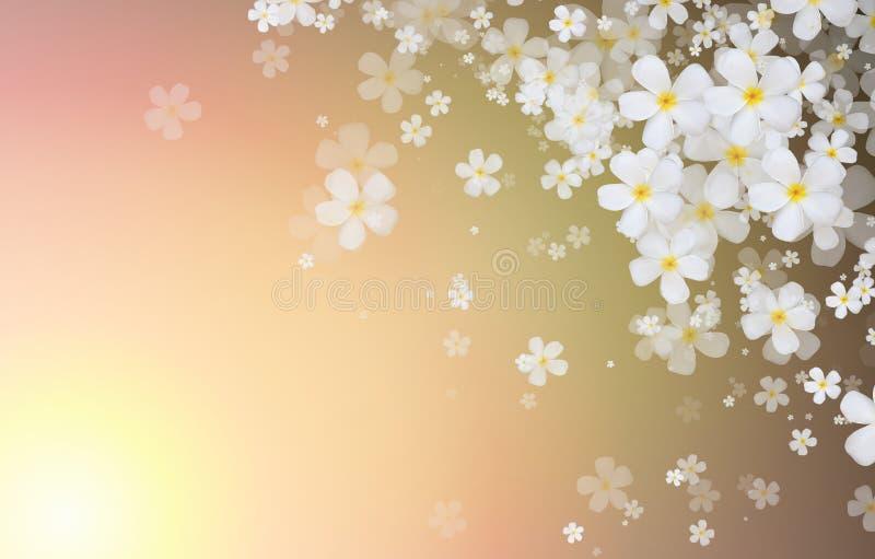 El Plumeria blanco o el Frangipani florece en color tropical de la pendiente stock de ilustración