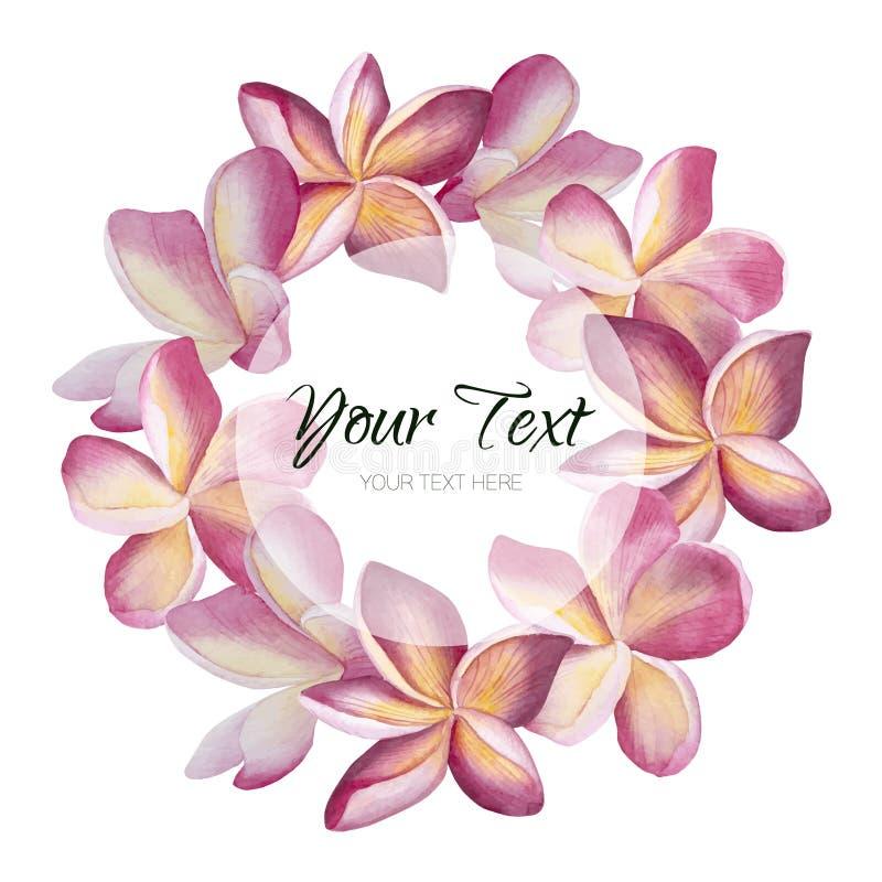El plumeria de la acuarela del vintage del vector florece la tarjeta de felicitación Fondo floral tropical ilustración del vector