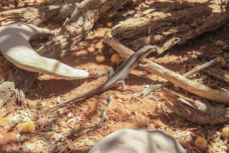 El poco lagarto en la tierra se enmascara imagenes de archivo