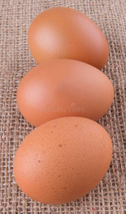 Download El pollo Eggs IX foto de archivo. Imagen de proteína - 42429018
