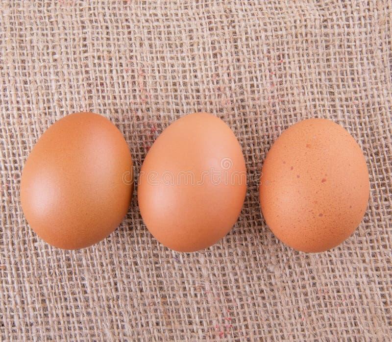 Download El pollo Eggs VIII foto de archivo. Imagen de pollo, tela - 42429014