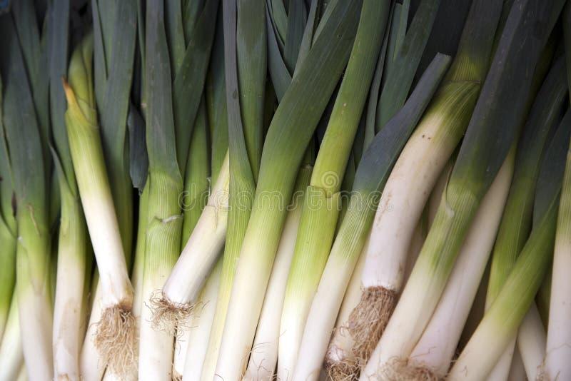 El porrum del allium, llamado como puerro es una verdura y viene de las verduras del ajo imagen de archivo