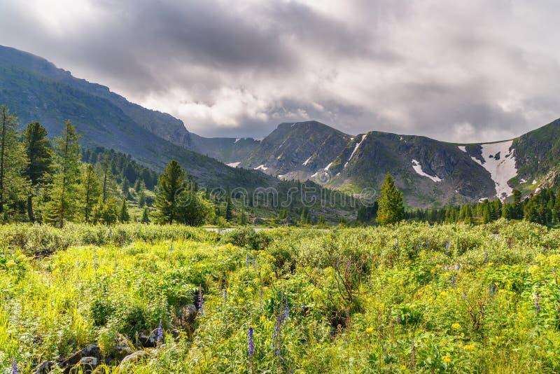 El prado con los wildflowers acerca al cuarto lago de los lagos Karakol en la república de Altai Rusia fotografía de archivo libre de regalías