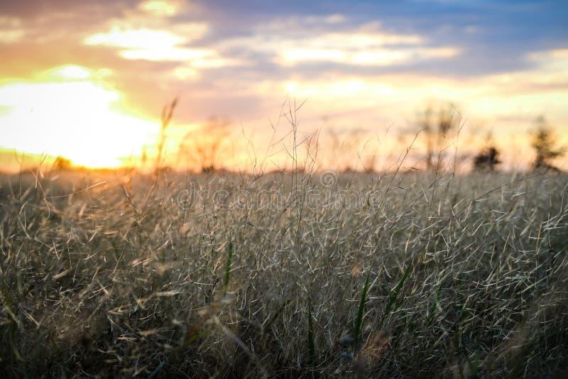 El prado con puesta del sol fotografía de archivo
