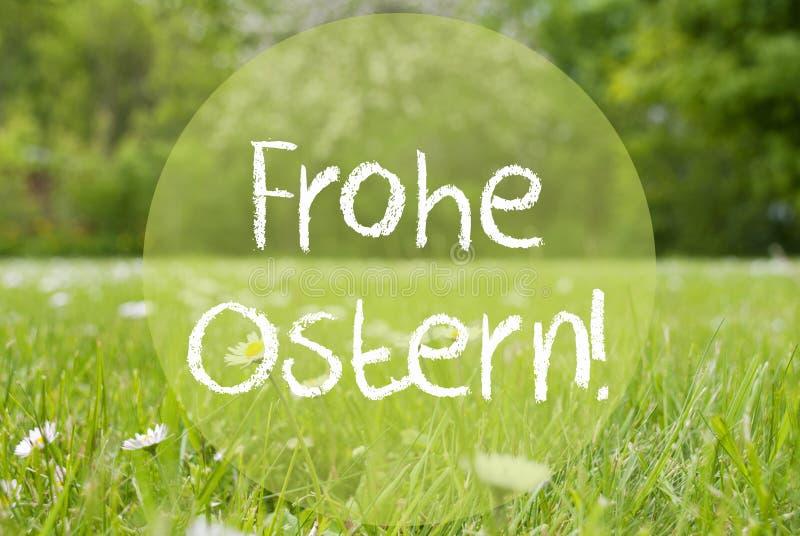 El prado de Gras, Daisy Flowers, Frohe Ostern significa Pascua feliz fotos de archivo