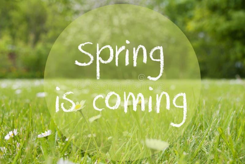 El prado de Gras, Daisy Flowers, primavera del texto está viniendo fotos de archivo libres de regalías