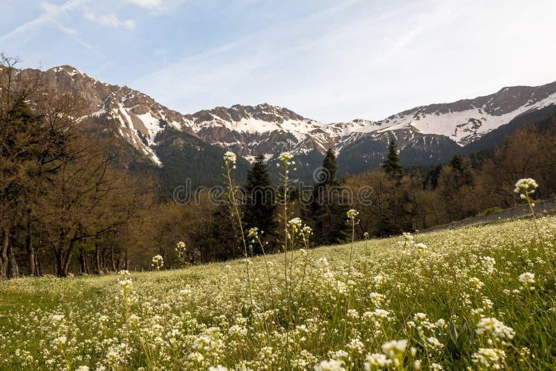 El prado de la monta?a en tops de la monta?a de la primavera ve la respiraci?n del cielo de las colinas del bosque de la belleza fotos de archivo