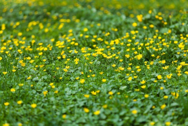 El prado de la primavera imágenes de archivo libres de regalías