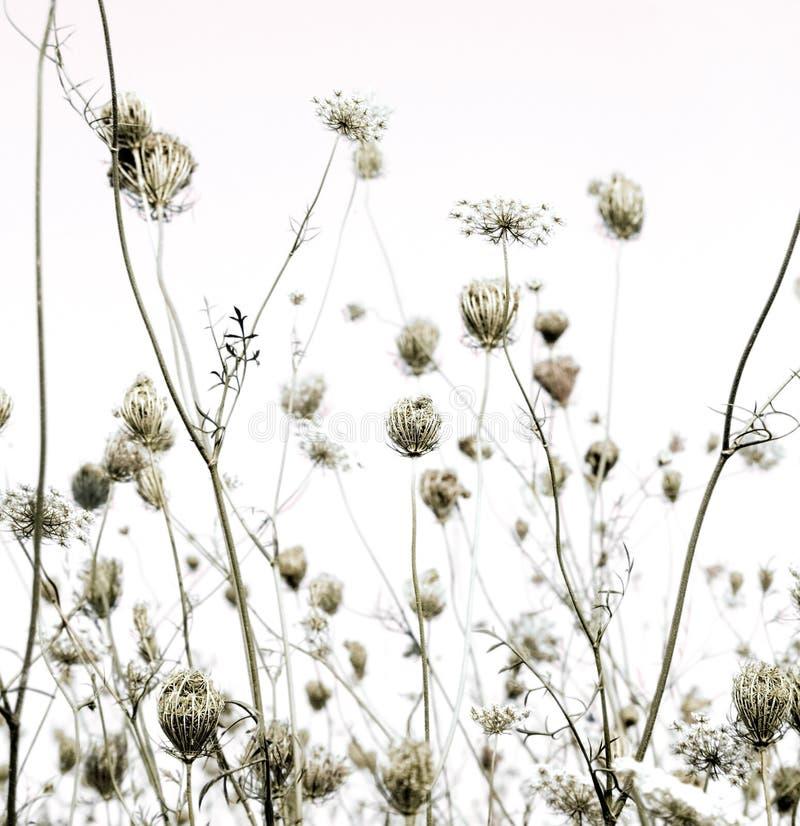 El prado del verano siluetea el fondo del arte foto de archivo