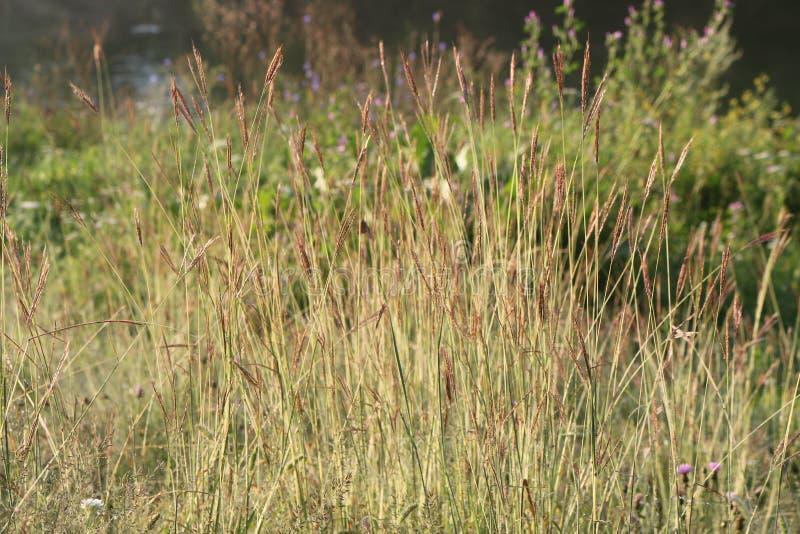 El prado en la orilla del río se crece demasiado con las hierbas suculentas fotos de archivo