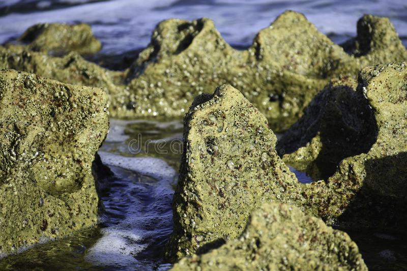 El primer coralino de la Roca-formación como la marea fluye hacia fuera, Uvongo, Suráfrica fotografía de archivo libre de regalías