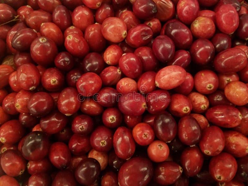 El primer de arándanos rojos frescos, consigue sus antioxidantes fotos de archivo