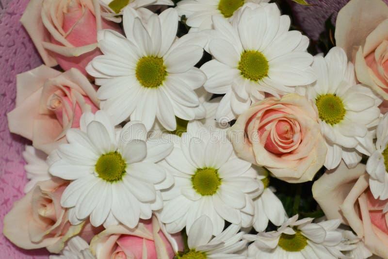 El primer de rosas rosadas y de la margarita blanca florece el ramo para el fondo del d?a de fiesta fotografía de archivo