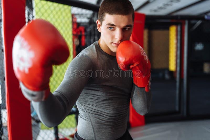 El primer del guante de boxeo, el boxeador de sexo masculino enganchó al entrenamiento en el gimnasio, en una jaula para una luch fotografía de archivo libre de regalías
