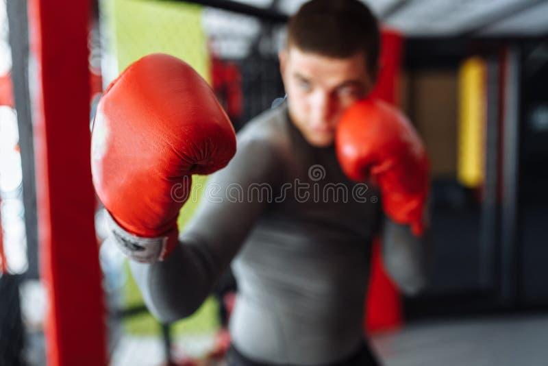 El primer del guante de boxeo, el boxeador de sexo masculino enganchó al entrenamiento en el gimnasio, en una jaula para una luch fotos de archivo libres de regalías