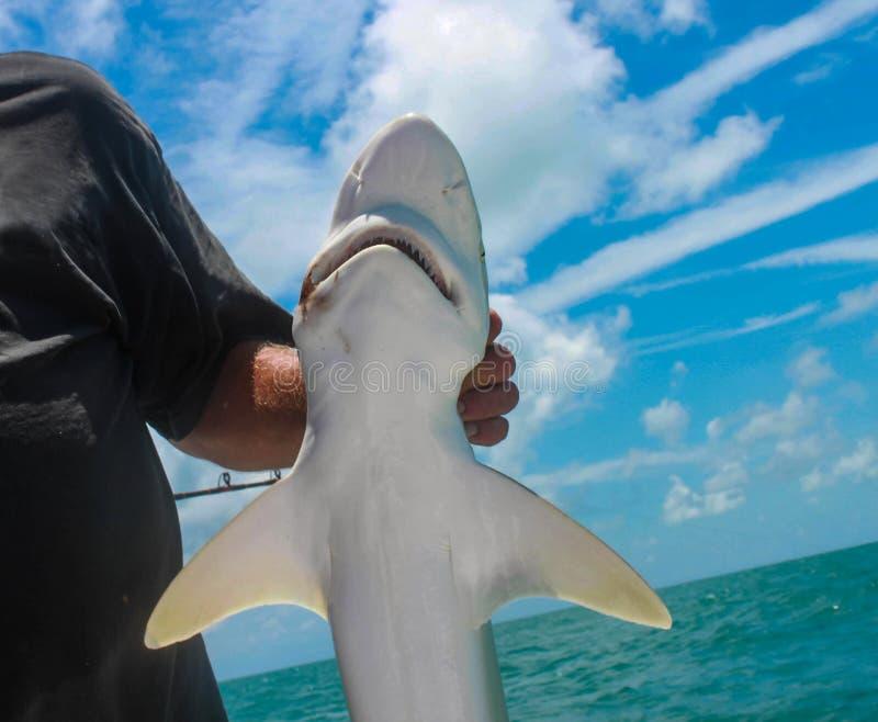 El primer del pequeño tiburón se sostuvo por el pescador en el barco profundo de la pesca en mar foto de archivo libre de regalías