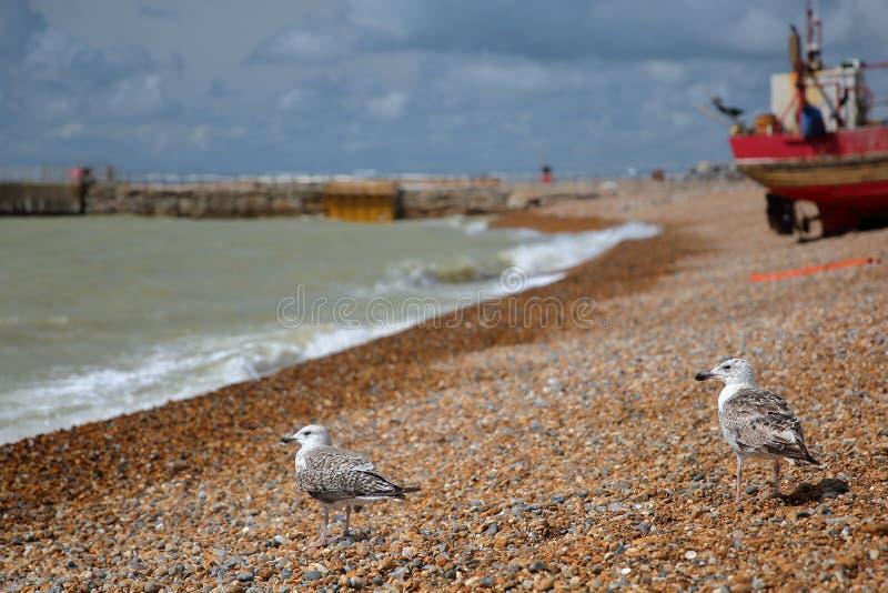 El primer en gaviotas con una playa lanzó el barco de pesca en el fondo, Hastings, Reino Unido foto de archivo