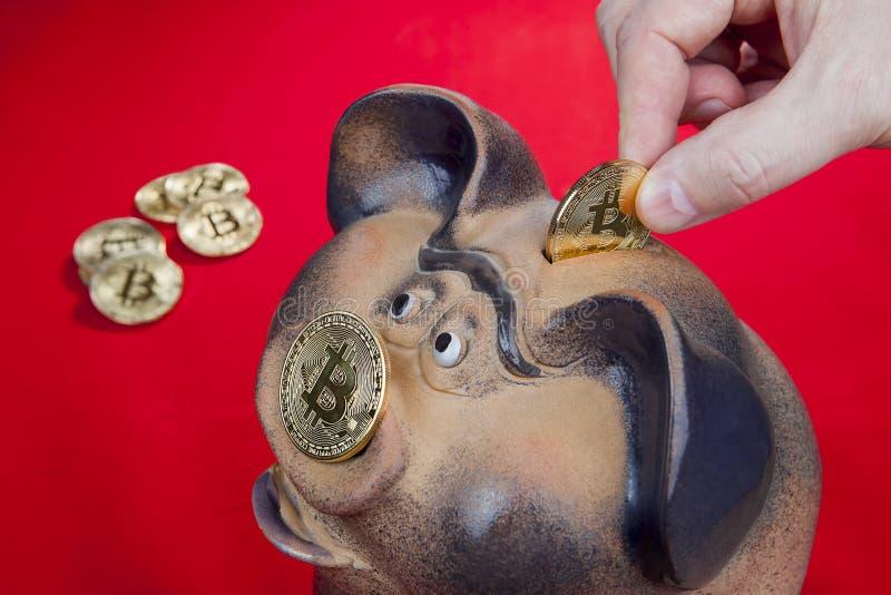 El primer, mano humana baja el bitcoin de la moneda en ranura de la hucha imagen de archivo libre de regalías