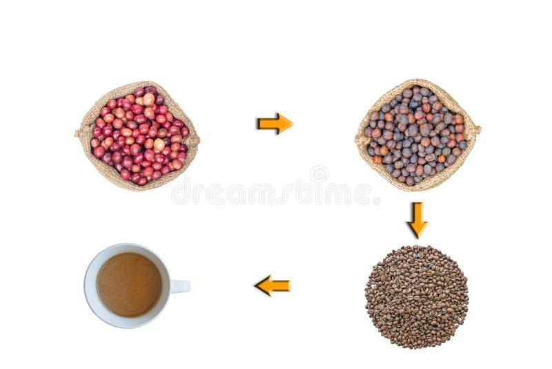 El proceso de la producción del café fotografía de archivo libre de regalías