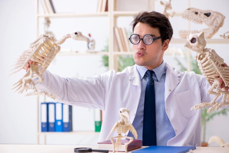 El profesor loco divertido que estudia los esqueletos animales foto de archivo