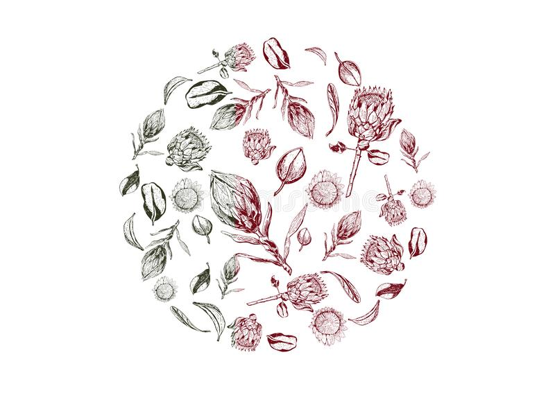 El protea de rey florece, florece y deja artículos compuestos en forma del círculo libre illustration